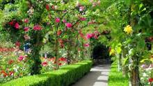 GardenClubMay17