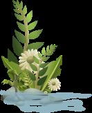 plantsnogloss